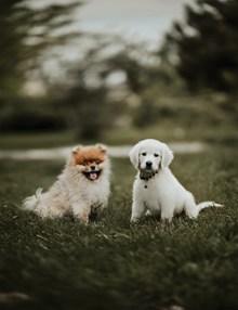可爱狗狗草地写真图片大全