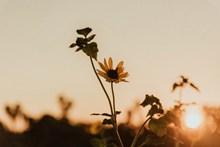 逆光黄昏非主流花草 逆光黄昏非主流花草大全精美图片