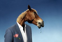 穿西装的马另类精美图片