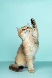 呆萌小猫可爱高清图片