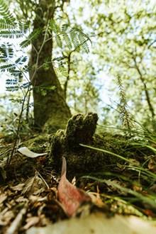 树林局部摄影图片