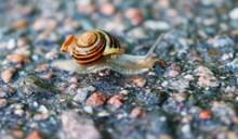 唯美小蜗牛摄影高清图