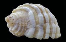 精美螺旋贝壳图片素材