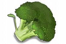 绿色西兰花卡通高清图片