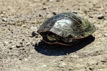 缩头的乌龟高清图