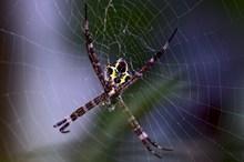 蜘蛛网上知网蜘蛛高清图