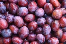 红李子果图片