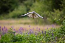 野生飞禽高清图