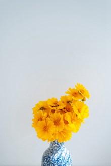 黄色菊花插花高清图片