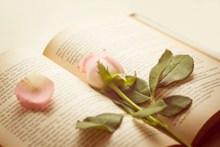 治愈系小清新书籍精美图片