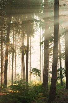 逆光森林高清图片