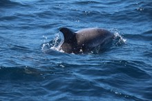 海豚真实精美图片