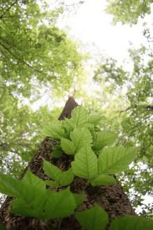 春天绿色树木图片素材