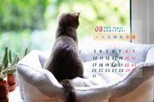 2020年8月日历 _2020年8月日历桌面_站长素材图片