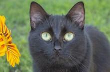 黑猫瞪眼图片大全