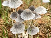 菌类小蘑菇图片
