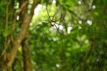 蜘蛛网上爬行蜘蛛精美图片