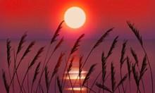 傍晚海面日落风景图片