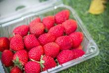 一盒鲜花草莓图片素材