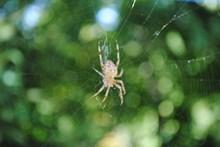 蜘蛛网蜘蛛素材高清图