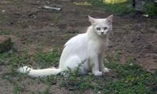 一只白色野猫精美图片