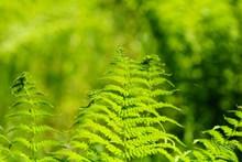 绿色蕨类植物素材高清图片