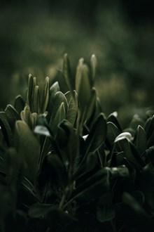 深绿色植物摄影高清图片