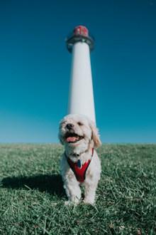可爱白色萌狗狗图片大全