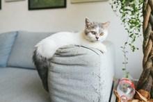 呆萌小猫可爱图片