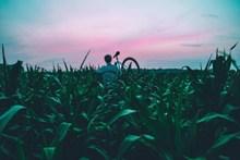 玉米地帅哥背影图片