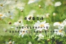 洋甘菊花语图片素材