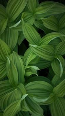 绿色植物叶子局部摄影高清图
