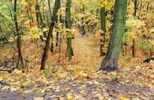 初秋树林图片下载