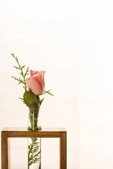 粉色静物玫瑰花精美图片