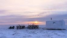冬季草原驯鹿拉雪橇图片素材
