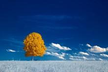 秋季治愈系风景高清图