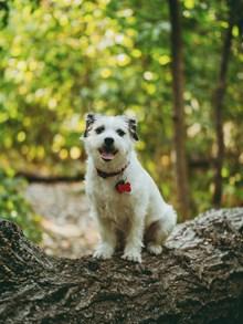 白色憨狗狗图片素材
