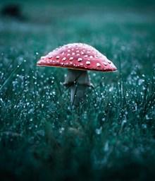 雨后草地蘑菇精美图片
