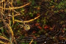 丛林蜘蛛网蜘蛛图片下载