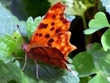 漂亮橙色蝴蝶图片素材