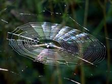 晶莹剔透的蜘蛛网高清图