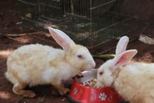 小白兔喂养高清图