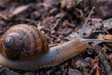 爬行小蜗牛摄影图片下载