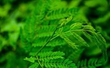 翠绿植物叶子高清图片