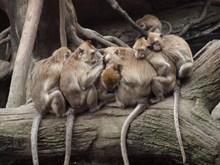 一群猴子睡觉图片下载
