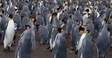 沙滩企鹅群图片