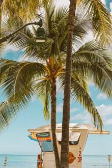 海边棕榈树欣赏图片大全