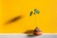 小清新盆栽黄色漆墙图片下载