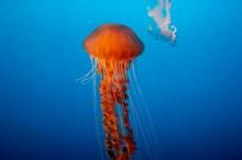 水母海底摄影图片下载
