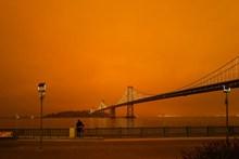 夜幕下的滨海城市吊桥图片